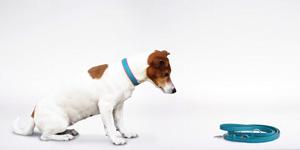 Hundehalsbänder und Leinen aus Leder